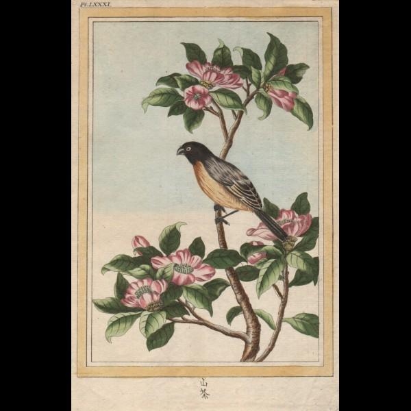 BUC'HOZ PIERRE-JOSEPH (1731-1807)  - OISEAU