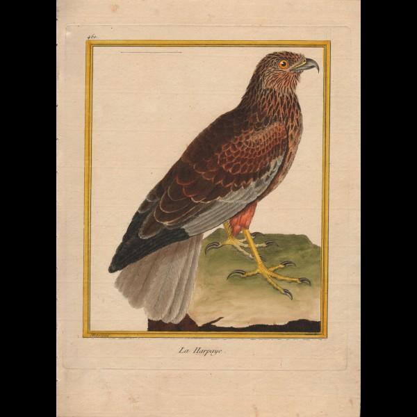 MARTINET FRANÇOIS-NICOLAS  (1731-180.)  - LA HARPAYE