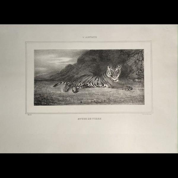 BARYE ANTOINE-LOUIS ( 1796-1875 ) - ETUDE DE TIGRE