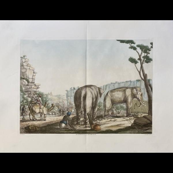 SOLVYNS FRANS BALTHAZAR ( 1760-1824 ) - ELEPHANTS ET CHAMEAUX