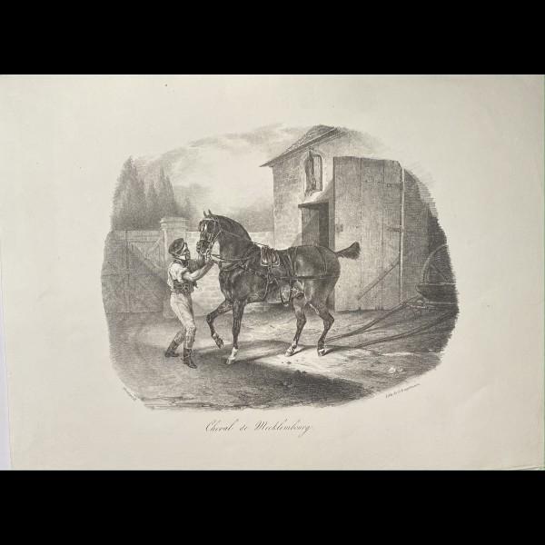 GERICAULT THEODORE (1791–1824) - CHEVAL DE MECKLEMBOURG