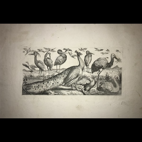 LE ROY HENRY (1579-1651) - OISEAUX, PLANCHE III