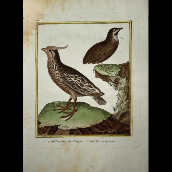 MARTINET FRANÇOIS-NICOLAS  (1731-180.)  - CAILLES