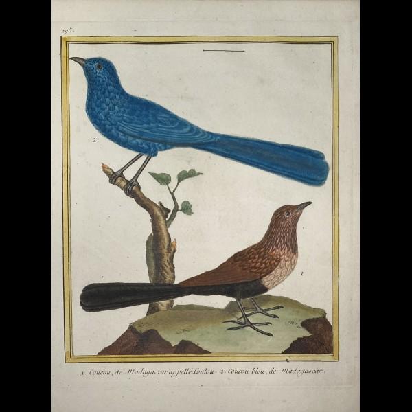 MARTINET FRANÇOIS-NICOLAS  (1731-180.)  - COUCOUS DE MADAGASCAR
