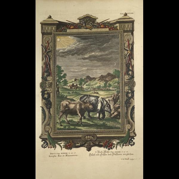 FÜSSLI JOHANN MELCHIOR (1677-1736) - JOSEPHI BOS ET RHINOCEROS