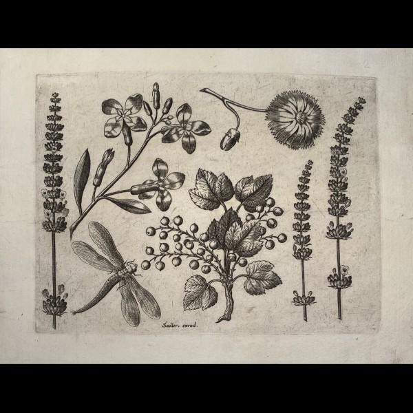 SADELER JOHANNES ( 1550-1600 ) - ORNEMENT, FLEURS ET LIBELLULE