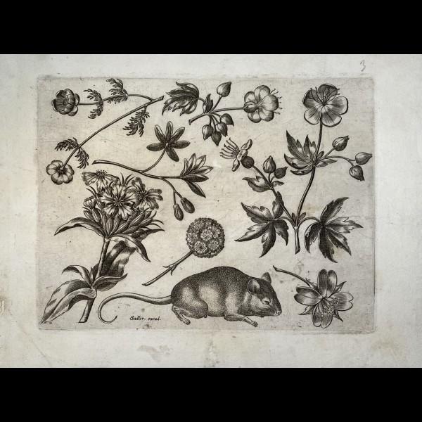 SADELER JOHANNES ( 1550-1600 ) - ORNEMENT, FLEURS ET SOURIS
