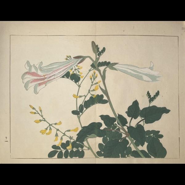 TESSAI TOMIOKA (1836-1924) - SHIKI NO HANA