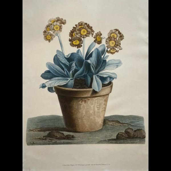 RUOTTE LOUIS CHARLES (1754-c.1806) - FLEURS